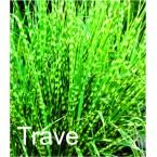 Orasne trave
