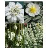 Cvetje v beli barvi (4)