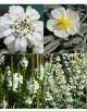 Cvetje v beli barvi