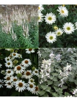 Cvetje v beli barvi (10 kvadratnih metrov - 18,9 EUR/m2)
