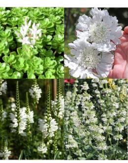 Cvetje v beli barvi (15 kvadratnih metrov - 17,9 EUR/m2)