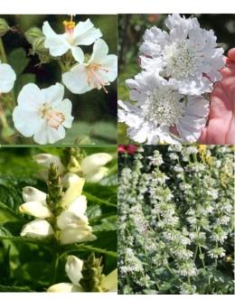 Cvetje v beli barvi (25 kvadratnih metrov - 19,3 EUR/m2)