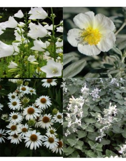 Cvetje v beli barvi (5 kvadratnih metrov - 18,9 EUR/m2)