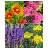 Rastline za čebele (4)