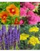 Rastline za čebele