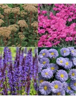 Rastline za čebele (10 kvadratnih metrov - 21 EUR/m2)