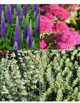 Rastline za čebele (15 kvadratnih metrov - 19,2 EUR/m2)