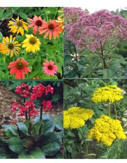 Rastline za čebele (25 kvadratnih metrov - 19,6 EUR/m2)