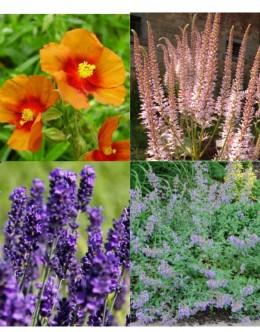 Rastline za čebele (5 kvadratnih metrov - 22  EUR/m2)