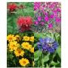 Cvetje močnih barv (4)