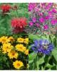 Cvetje močnih barv
