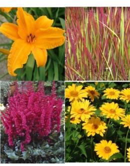 Cvetje močnih barv (10 kvadratnih metrov - 26,2 EUR/m2)