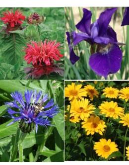 Cvetje močnih barv (15 kvadratnih metrov - 25 EUR/m2)