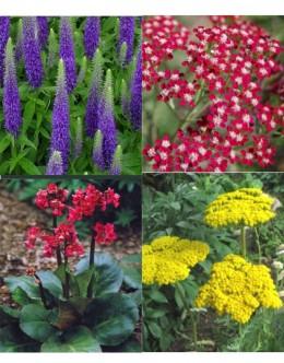 Cvetje močnih barv (25 kvadratnih metrov - 22,8 EUR/m2)