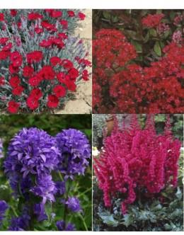 Cvetje močnih barv (5 kvadratnih metrov -29,8 EUR/m2)
