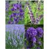 Cvetje v modro-vijola tonih (4)