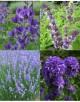 Cvetje v modro-vijola tonih
