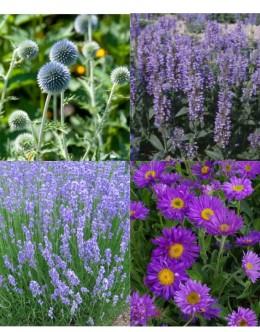 Cvetje v modro-vijola tonih (10 kvadratnih metrov - 24,9 EUR/m2)