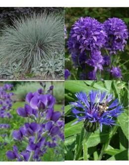 Cvetje v modro-vijola tonih (15 kvadratnih metrov - 24,1 EUR/m2)