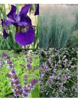 Cvetje v modro-vijola tonih (25 kvadratnih metrov - 23,7 EUR/m2)