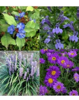 Cvetje v modro-vijola tonih (5 kvadratnih metrov - 23 EUR/m2)