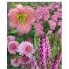 Cvetje v roza tonih (4)