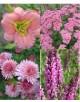 Cvetje v roza tonih