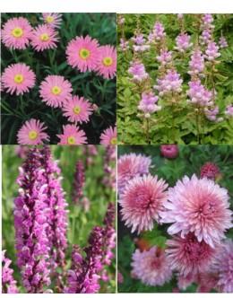 Cvetje v roza tonih (15 kvadratnih metrov -20,2 EUR/m2)