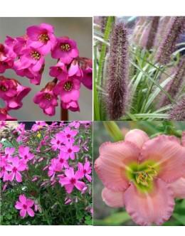 Cvetje v roza tonih (5 kvadratnih metrov -21,7 EUR/m2)