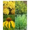 Cvetje v rumeni barvi (4)