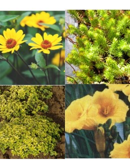 Cvetje v rumeni barvi (10 kvadratnih metrov - 18,5 EUR/m2)