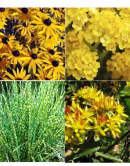 Cvetje v rumeni barvi (5 kvadratnih metrov - 19,6 EUR/m2)