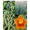 Sivo listje (4)