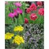 Rezano cvetje (4)