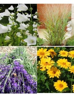 Rezano cvetje (10 kvadratnih metrov- 21,8 EUR/m2)