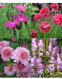 Rezano cvetje (25 kvadratnih metrov - 19,9 EUR/m2)