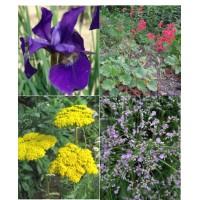 Rezano cvetje (5 kvadratnih metrov - 19,7 EUR/m2)